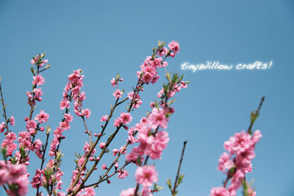 peach blossoms 2